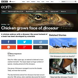 Earth - Chicken grows face of dinosaur