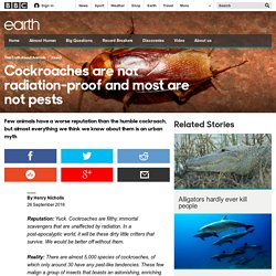 Earth - Cockroaches are not radiation-proof and most are not pests