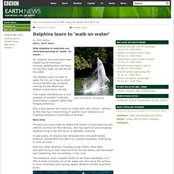 BBC - Earth News - Dolphins learn to 'walk on water'