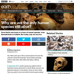Earth - Why are we the only human species still alive?