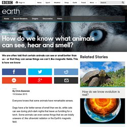 Earth - How do we know what animals can see, hear and smell?