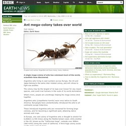 BBC - Earth News - Ant mega-colony takes over world
