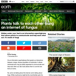 *****Earth - Plants talk to each other using an internet of fungus e.g. tomato plant warning system (decomposers)