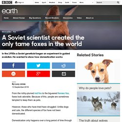 Earth - A Soviet scientist created the only tame foxes in the world