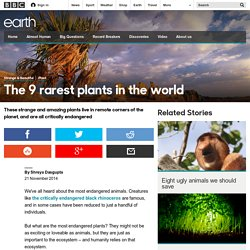 Earth - The 9 rarest plants in the world