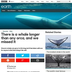 Earth - There is a whale longer than any orca, and we missed it