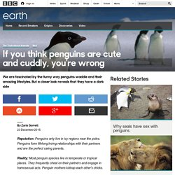 Earth - If you think penguins are cute and cuddly, you're wrong