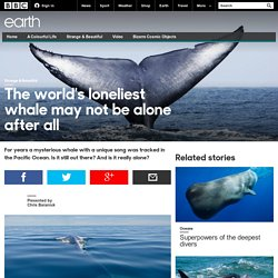 Earth - The world's loneliest whale may not be alone after all