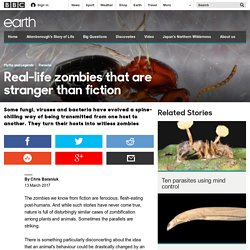 Earth - Real-life zombies that are stranger than fiction