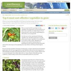 Eartheasy BlogTop 6 most cost-effective vegetables to grow - Eartheasy Blog