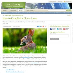 Eartheasy Blog » How to Establish a Clover Lawn