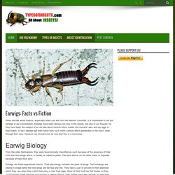 Earwigs: Facts vs Fiction - Types Of Insects
