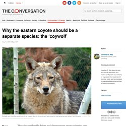 Why the eastern coyote should be a separate species: the 'coywolf'