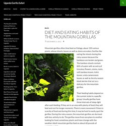 Diet And Eating Habits of the Mountain Gorillas