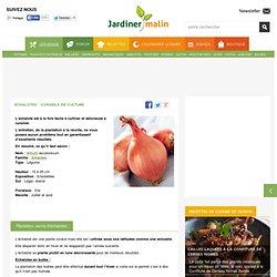 Echalote : semis, culture, recolte