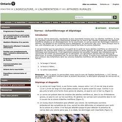 OMAFRA - AVRIL 2012 - Varroa - échantillonnage et dépistage