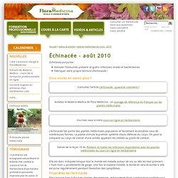 Échinacée - août 2010