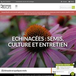 Echinacée - Semis, culture et entretien - Nos conseils - Promesse de Fleurs
