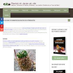 La culture d'Echinofossulocactus ou Sténocactus
