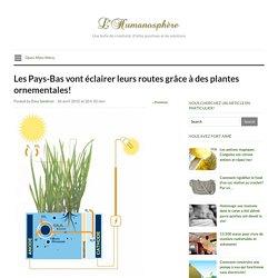 Les Pays-Bas vont éclairer leurs routes grâce à des plantes ornementales!
