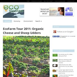EcoFarm Tour 2011: Organic Cheese and Sheep Udders – EcoLocalizer