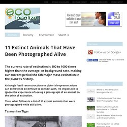 11 Extinct Animals That Have Been Photographed Alive