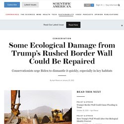 Some Ecological Damage from Trump's Rushed Border Wall Could Be Repaired