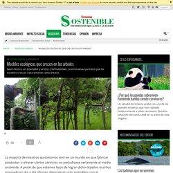 Muebles ecológicos que crecen en los árboles - Sostenibilidad Semana