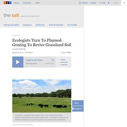 Ecologists Turn To Planned Grazing To Revive Grassland Soil : The Salt