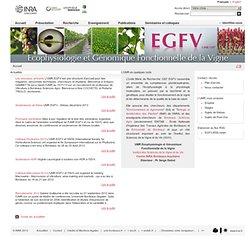 Ecophysiologie et Génomique Fonctionnelle de la Vigne - Umr 1287 EGVF