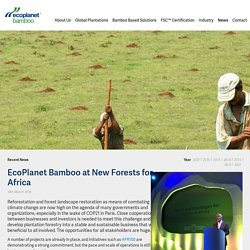 EcoPlanet Bamboo Co-Founder Camille Rebelo at New Forests for Africa