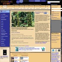 Ecosistema de la Selva Tropical