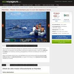 Ecovolontariat Polynesie : suivi des baleines à bosse