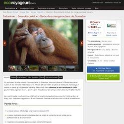 Ecovolontariat Indonésie : étude des orangs-outans de Sumatra