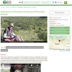 Ecovolontariat Chevaux de Przewalski en Mongolie