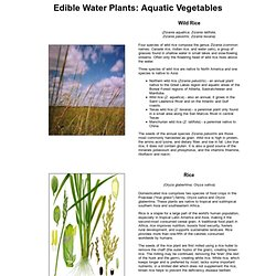Edible Water Plants: Aquatic Vegetables