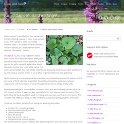 Edible Wild Food Blog » Eating Garlic Mustard is a Win-Win