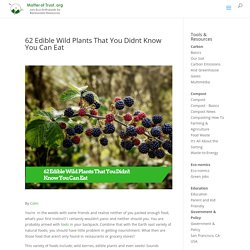 62 Edible Wild Plants That You Didnt Know You Can Eat