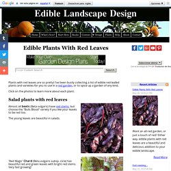 Edible Plants With Red Leaves