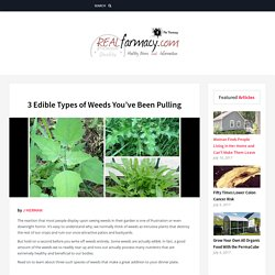 3 Edible Types of Weeds You've Been Pulling – REALfarmacy.com