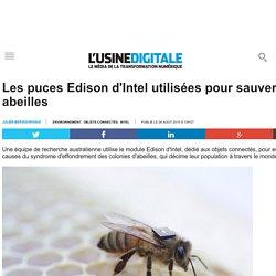 Les puces Edison d'Intel utilisées pour sauver les abeilles