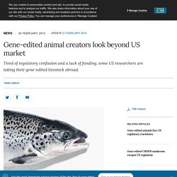 NATURE 20/02/19 Gene-edited animal creators look beyond US market - Tired of regulatory confusion and a lack of funding, some US researchers are taking their gene-edited livestock abroad.