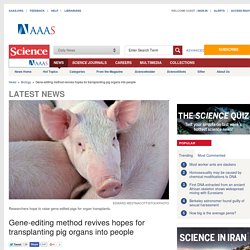 Gene-editing method revives hopes for transplanting pig organs into people