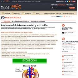 Anatomia del sistema excretor y excrecion