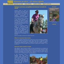 Stéphane Bigo, éducation du cheval, exercices structurants