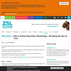 's Online Education Workshops - Bringing the Zoo to You!