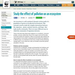 Study the effect of pollution on an ecosystem