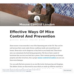 Effective Ways Of Mice Control And Prevention – Mouse Control London