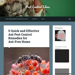 5 Quick and Effective Ant Pest Control Remedies for Ant-Free Home – Pest Control Ideas