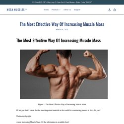 The Most Effective Way Of Increasing Muscle Mass – Mega Muscles™